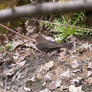Badania przyrodnicze - waloryzacja napodstawie obserwacji terenowych