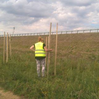 Kompleksowy nadzór przyrodniczy iśrodowiskowy nadrealizacją przedsięwzięcia - autostrady A4 Rzeszów - Jarosław