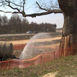 Stały nadzór dendrologiczny wzakresie monitorowania stanu zdrowotnego drzew (dębów) - pomników przyrody